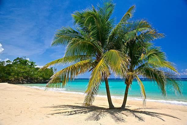 Palm Trees and Sea Adventure