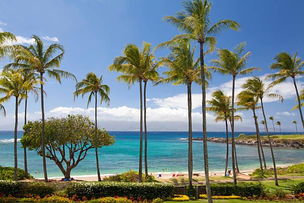 Kapalua Bay resort destination tropical beach with palm trees in Kapalua, Maui, Hawaii.