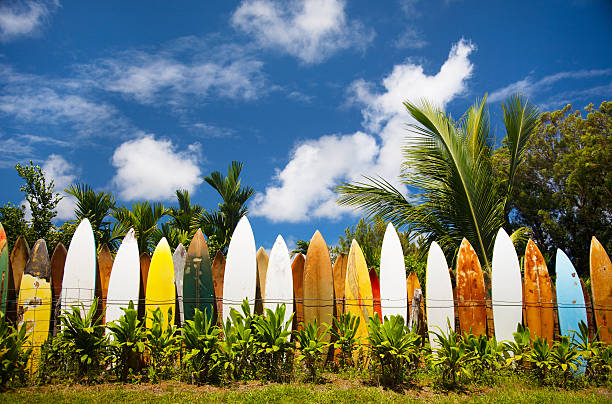 Bunch of surfing boards on a sunny day in Maui
